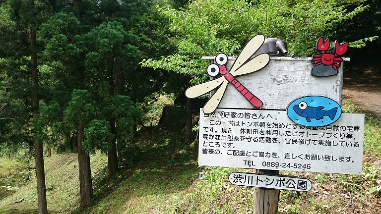 渋川トンボまつり | 高知県 日高村移住促進プロジェクト|日本の高知の村です。|日高村 移住